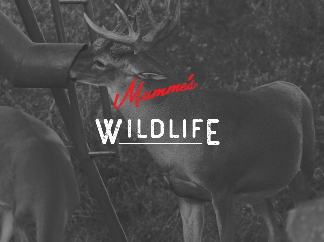 Mumme's Wildlife