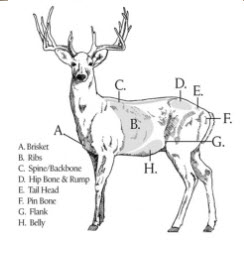 Body Condition Score for Deer