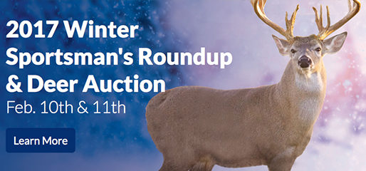 deer auction