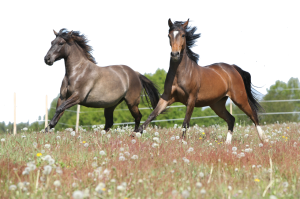 Horse Seasonal Diet Changes this Fall